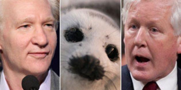Bob Rae: Bill Maher Should Stop Singling Out Seal