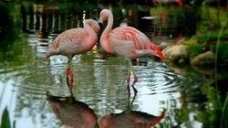 Calgary Captures: Flamingos Form a Beautiful Heart at the Calgary
