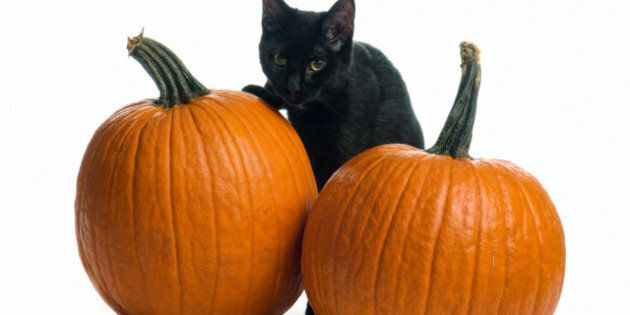 Black Cats Halloween: Busting Myths Around The Pets For The