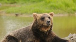 Grizzlies Need B.C. 'Safe Havens':