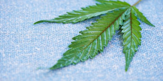 Hemp Into Fibre: Ottawa Puts Up Money To Spin Hemp And Flax Into
