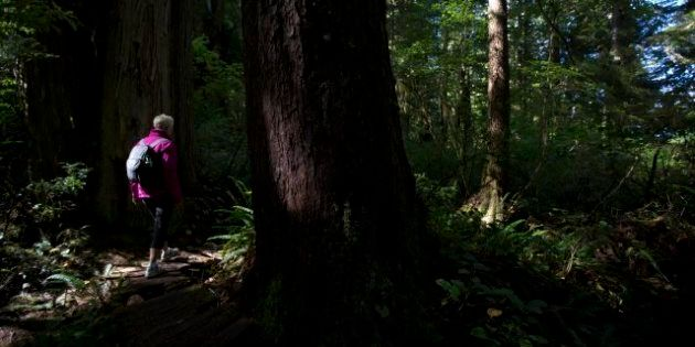 BC Forest Act Changes Withdrawn, More Public Input
