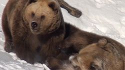 WATCH: Bears Totally Stoked About Snow After