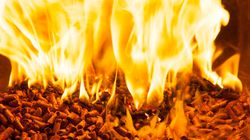 Biomass: There's Money in That Wood