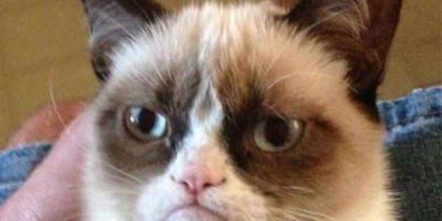 Love Cat Videos? Prove