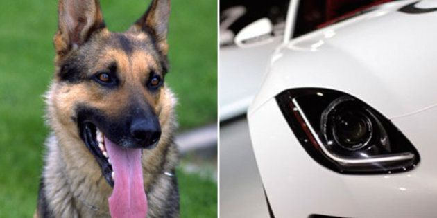 Police Dog Helps Nab Alberta Jaguar Driver Following High Speed