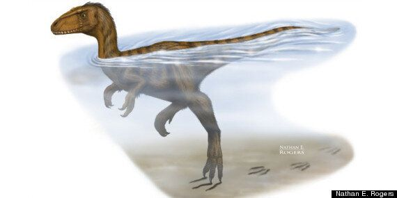 Dinosaurs In The Water: University Of Alberta Researchers Show Dinos Could