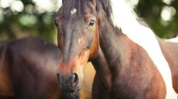 Horse Breaks Free At