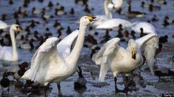 Ontario's Wildlife Needs Continued