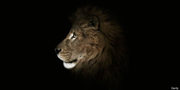 Lion Attack Injures Montreal Woman At South African