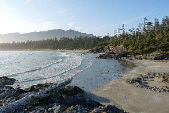 Can We Save Clayoquot