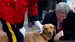 Royal Pooch To Retire From