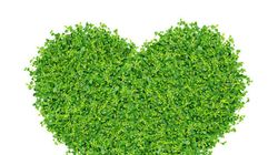 Everything You Need To Know About The Green Living