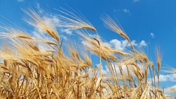 Say Goodbye To The Wheat