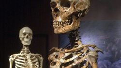 Neanderthal Genome May Hold Clues To Human