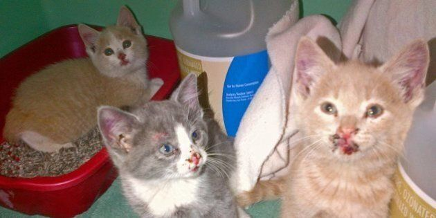Kittens Thrown From Truck On Sask. Highway