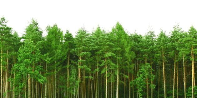 You Are Better Off Investing in Sustainability Than