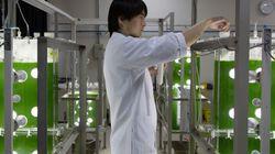 Treating Biodiesel Like a
