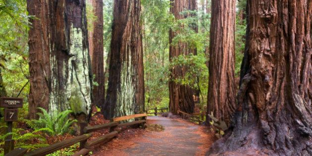 Cathedral Grove Ranked Top Forest Walk In Vancouver Island