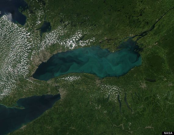 Lake Ontario 'Whiting' Leaves Water A Terrifying Neon Green