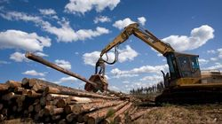 Canada's Forestry Business To Make Bank Off Hurricane: