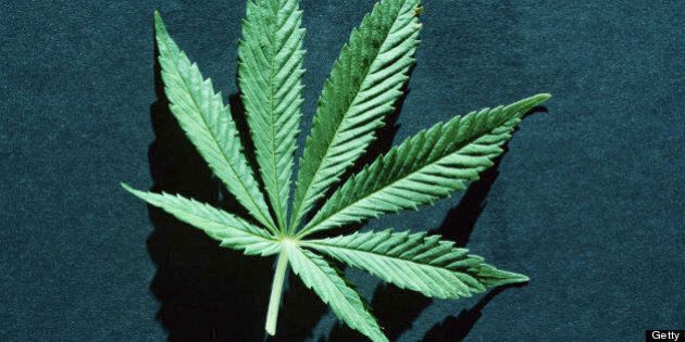 Marijuana Plants Growing Outside Hamilton Courthouse, Cops