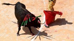 Un taureau s'échappe d'une feria dans le Gard: cinq blessés dont deux