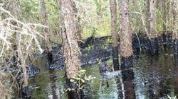 LOOK: Leaked Photos Show Extent Of CNRL Oil Spill