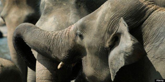 Calgary Zoo Elephants To Be