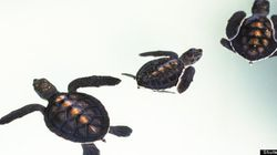 Man Accused Of Smuggling More Than 50 Turtles Into
