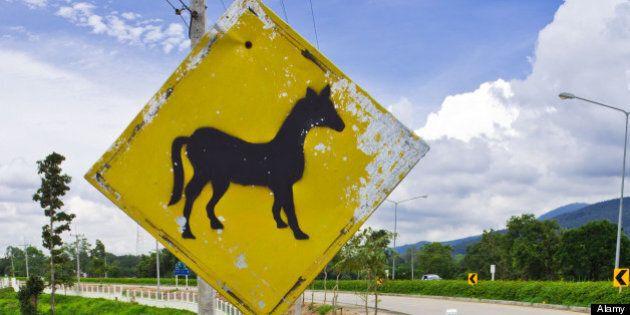 Duchess, Alberta Woman Dead After Car Slams Into Horses On