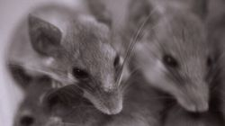 Horror Ensues As Mice Nibble On Dementia Patient's