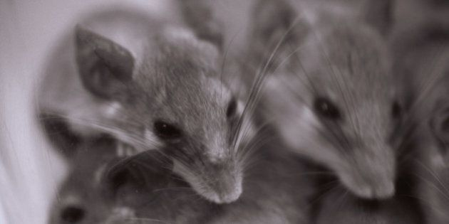 Mice Nibble On Dementia Patient's Face At St. Therese Villa In