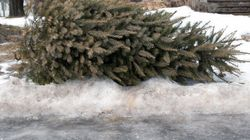 Quebec City Burns Christmas Trees For Last