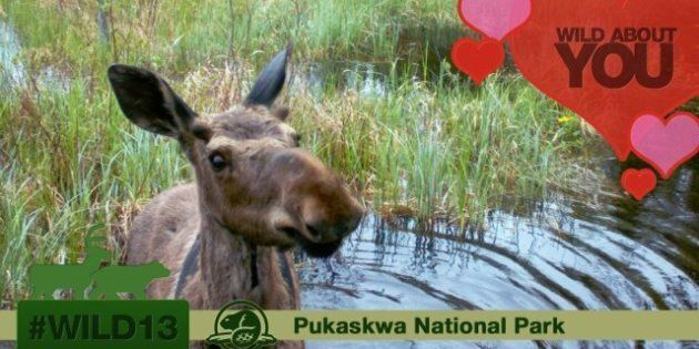 #Wild13 Valentine's Day Photos By Parks Canada Spread The