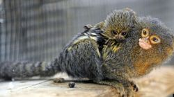 LOOK: Adorable Baby Animals And Their