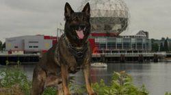 Vancouver Police Dog
