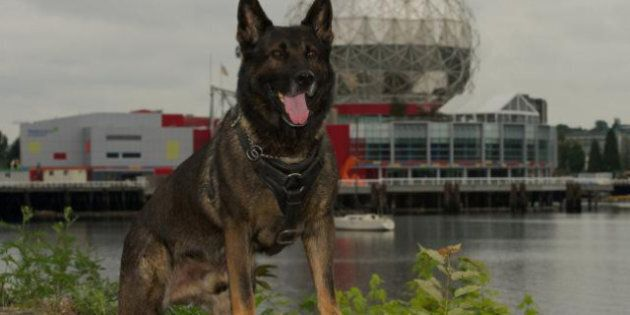 Teak, Vancouver Police Dog Stabbed During Robbery Enters Purina Hall Of