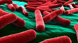 Canadian Scientists Look For Quicker E. Coli, Listeria