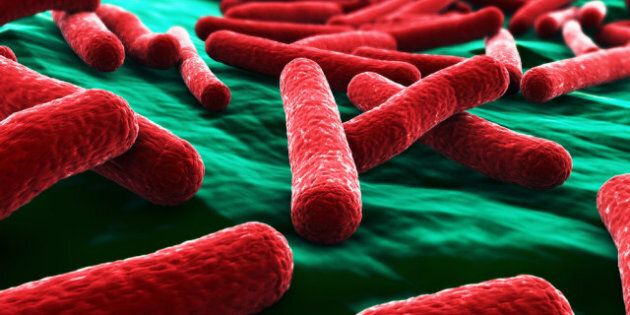 Canadian Scientists Look For Quicker E. Coli, Listeria