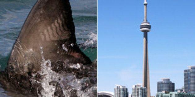 Ontario Judge Rules Toronto's Shark Fin Ban
