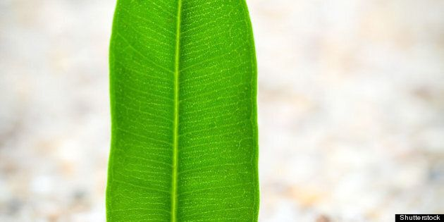 young plant grows from
