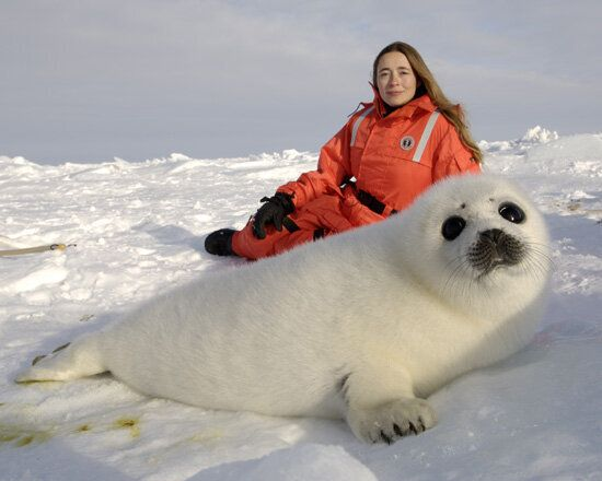 As the World Bans Seal Products Canada Must Ban the