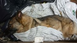 Charge Laid In Beaten Dumpster Dog's