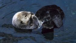 Hungry Otters A Problem In