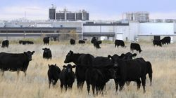 U.S. Management Gives Beleaguered Brooks Beef Plant New