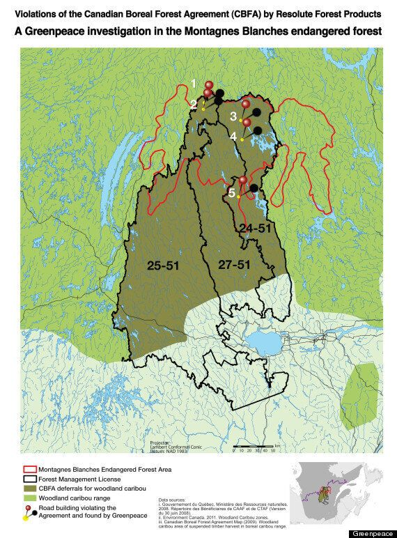 Resolute Forest Products Logging On Lands Protected Under Canadian Boreal Forest Agreement: Greenpeace