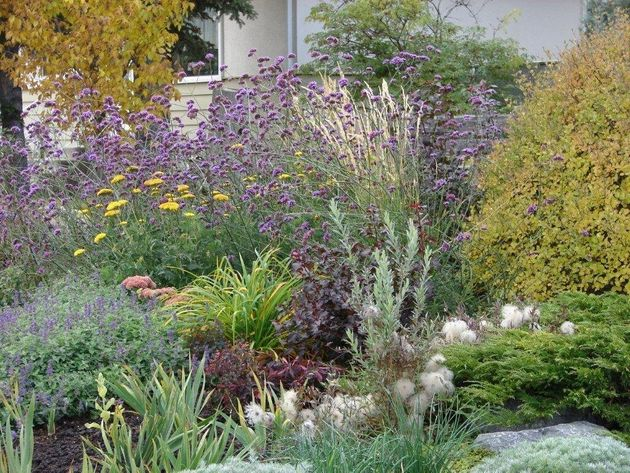 Dreams of Being Green: Gardening Tips for a Brown