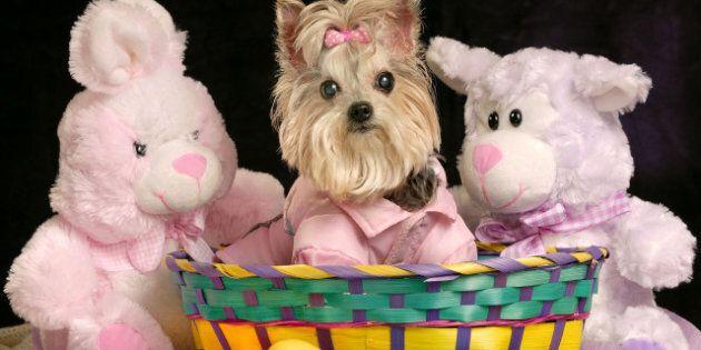 Easter Egg Hunts Around