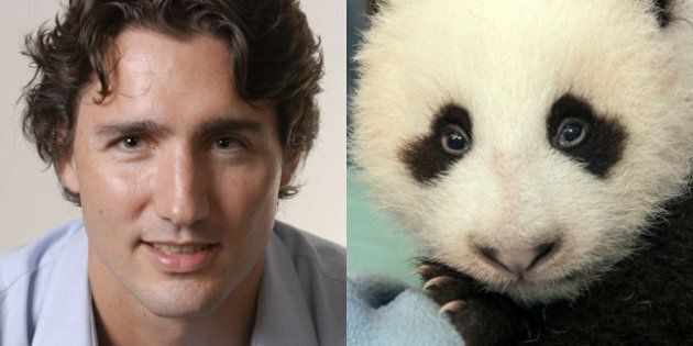 Justin Trudeau Panda Project: Liberal MP Sells Hair On